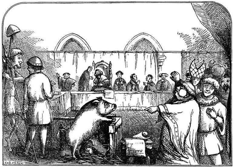 pig on trial