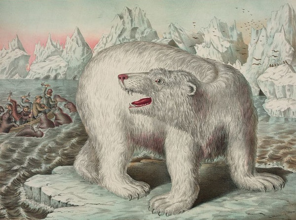 Darwin's Polar Bear