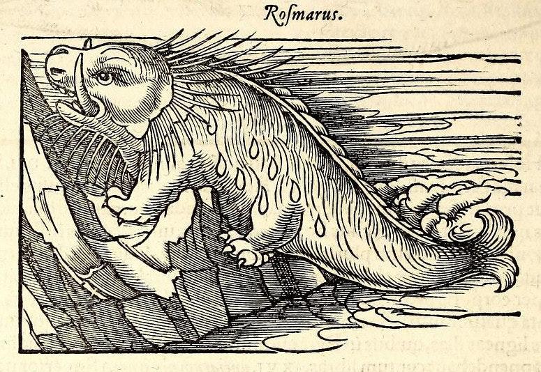 gesner rosmarus walrus