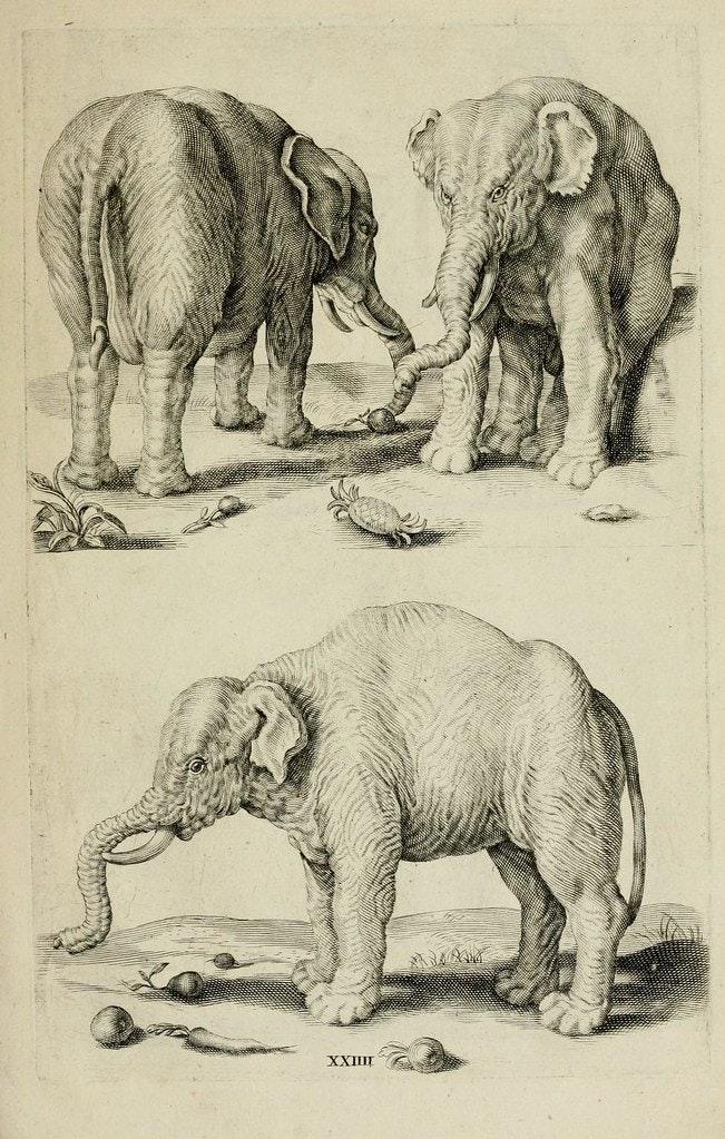 perfect elephant