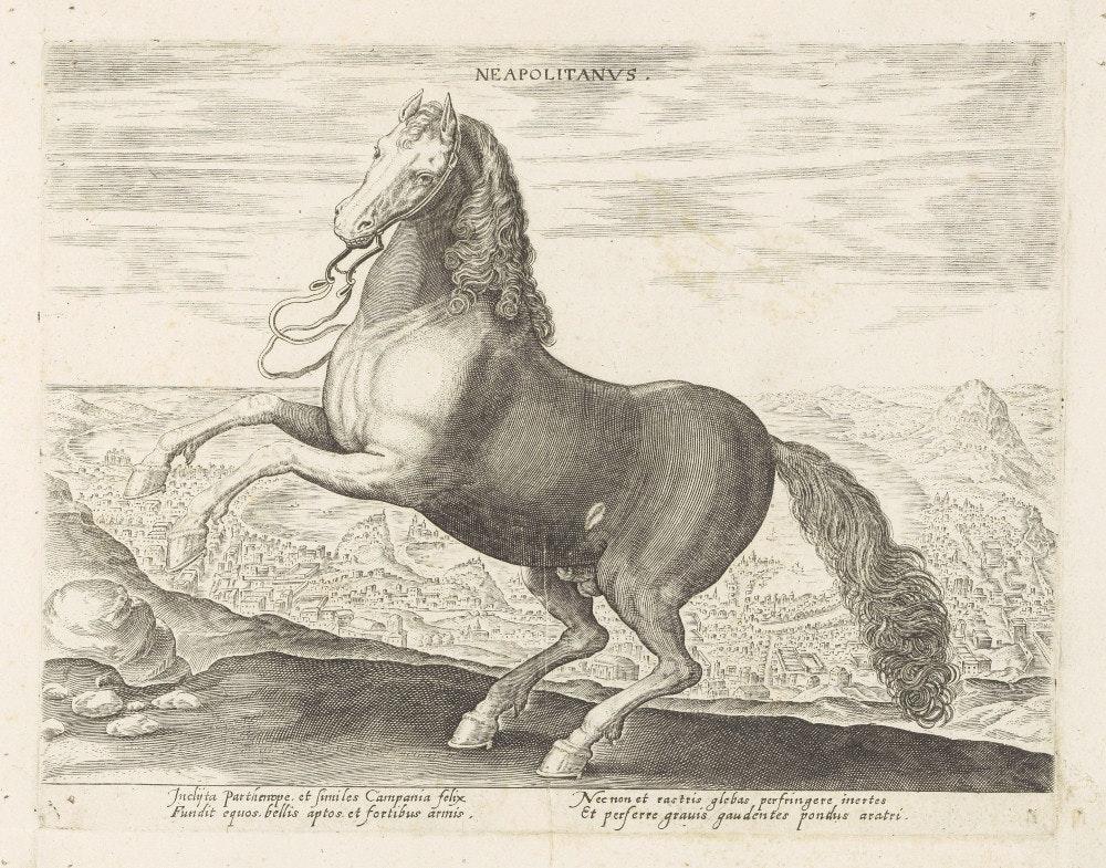 neopolitana horse