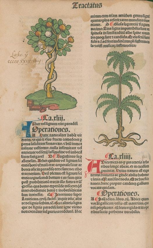 herbal manuscript