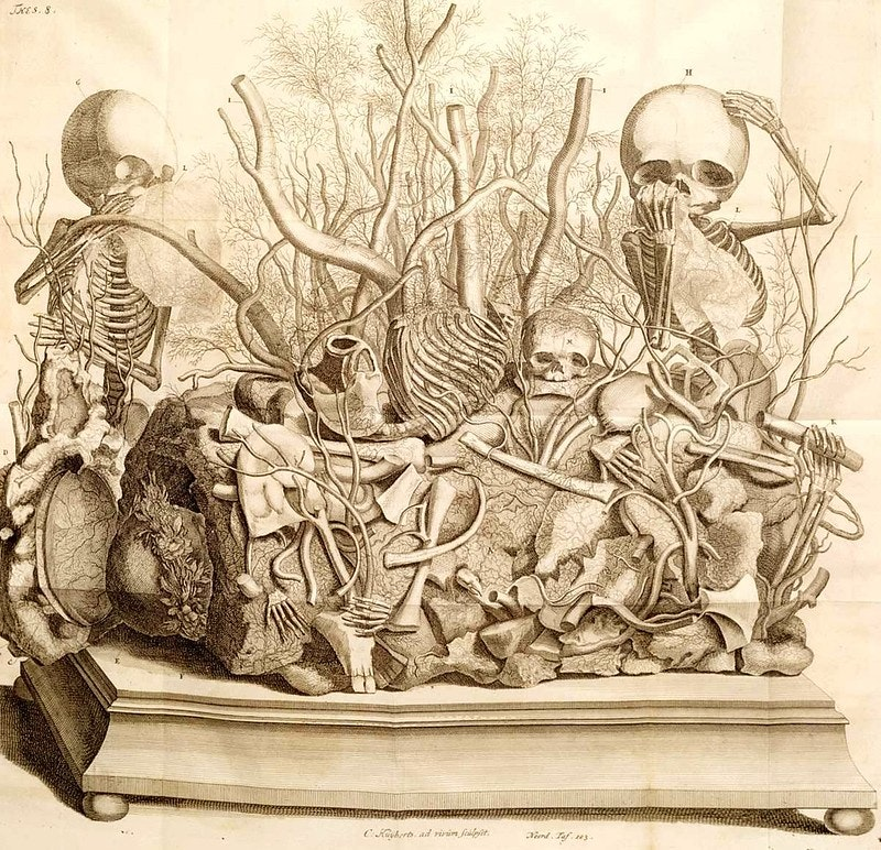 Ruysch skeleton display