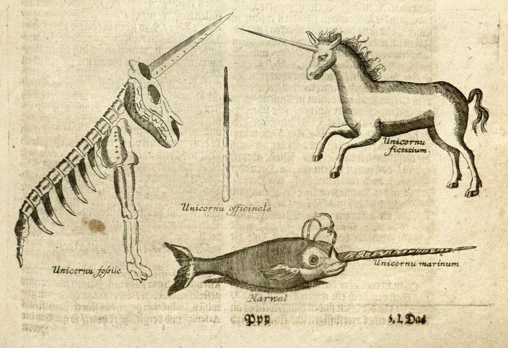 unicorn narwhal illustration