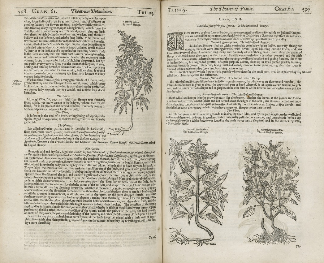early mention of cannabis