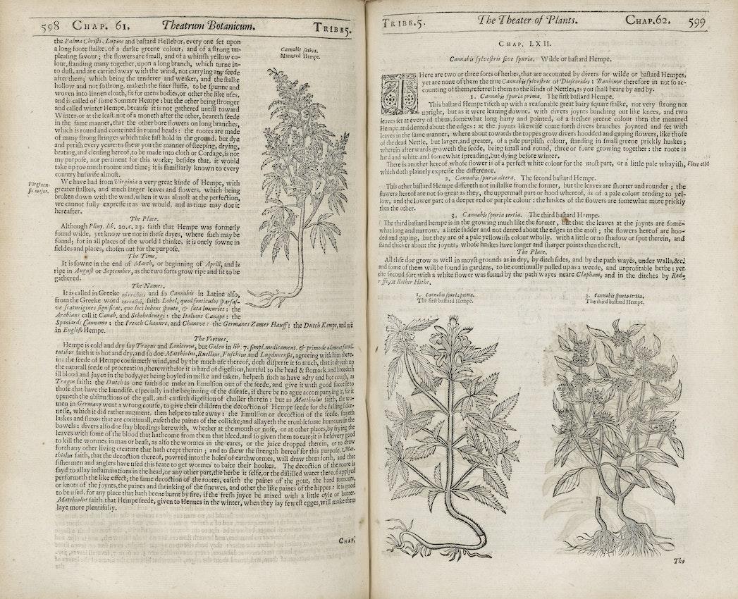 mención temprana de cannabis