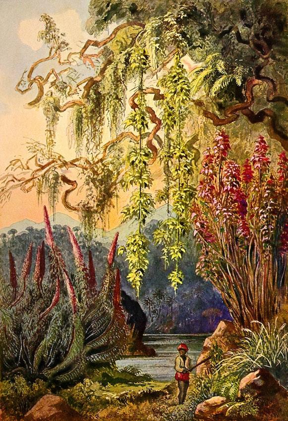 haeckel ceylon jungle