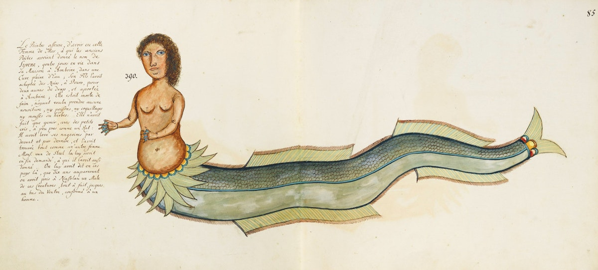 Samuel Fallours mermaid illustration