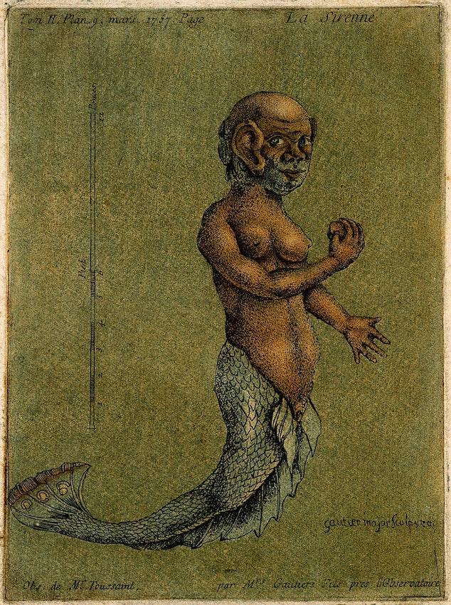 Gautier D'Agoty mermaid illustration
