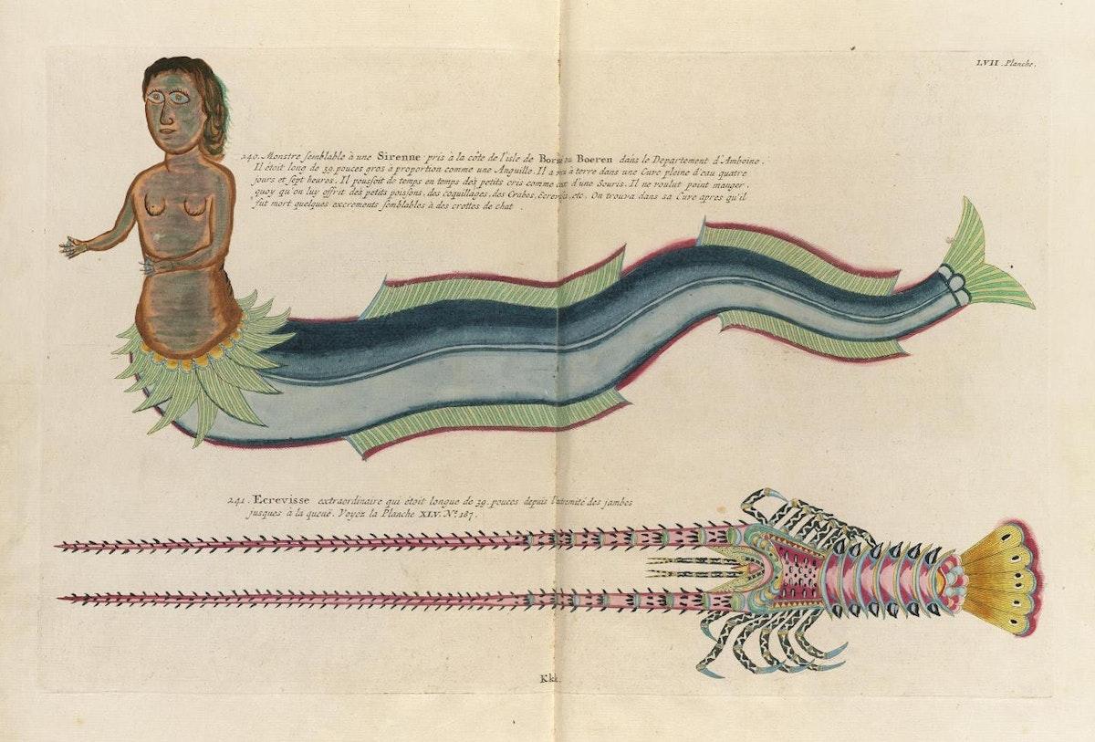 Samuel Fallours mermaid illustration printed by Louis Renard