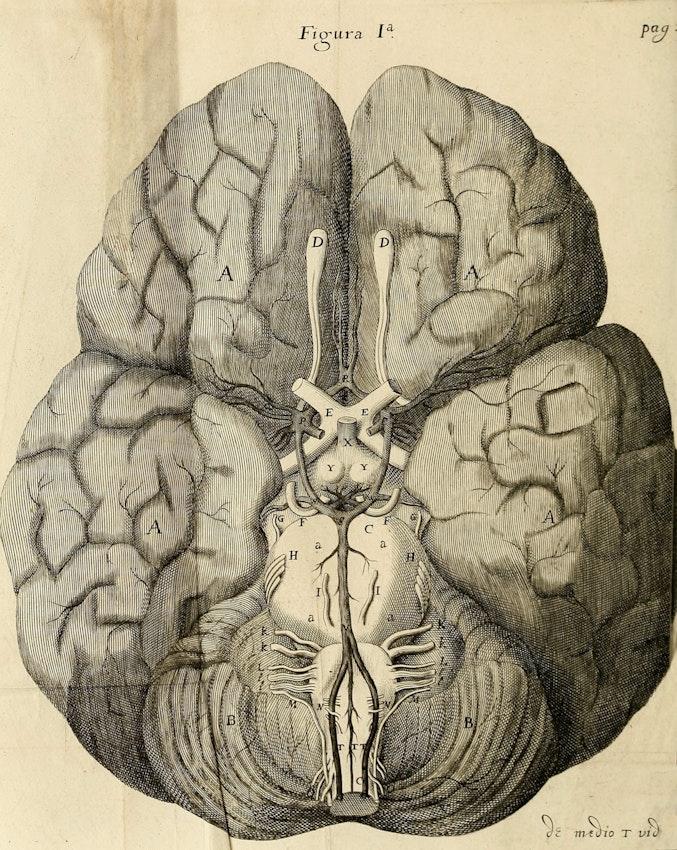Christopher Wren's engraving of the brain