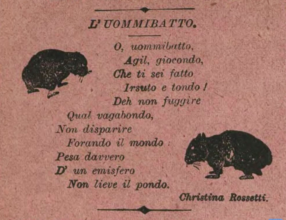 rossetti wombat