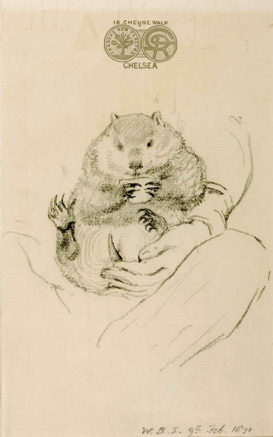 Rossetti's Wombat woodchuck