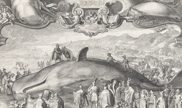 Picturing Scent: The Tale of a Beached Whale