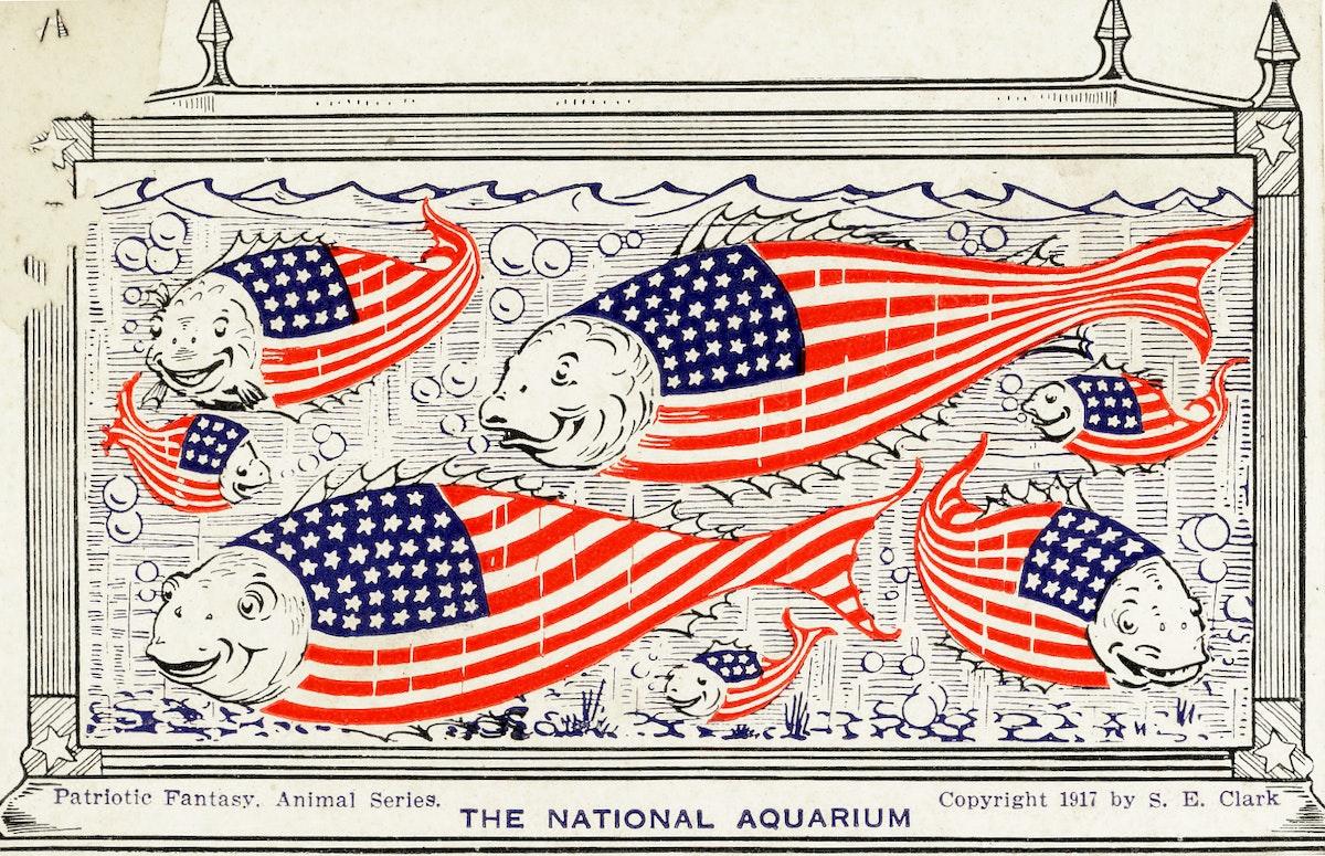 the national aquarium of patriotic fish