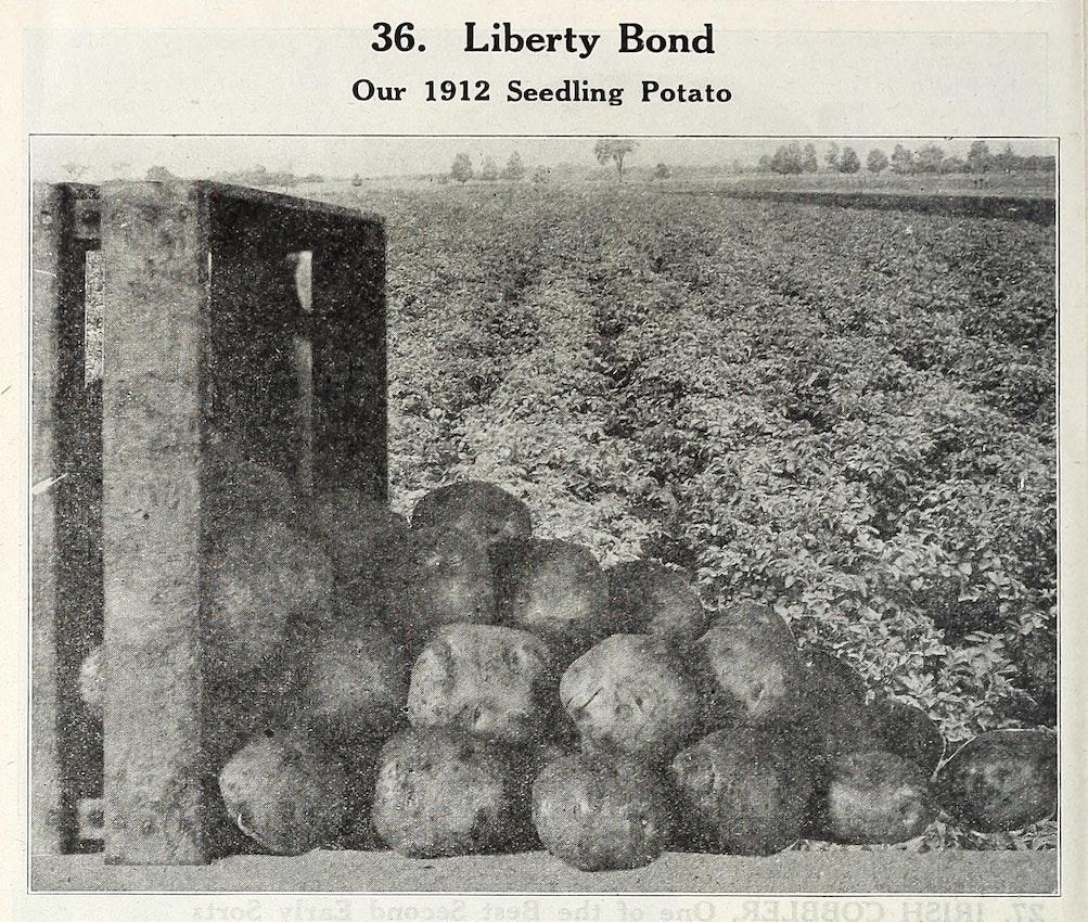 The Liberty Bond potato