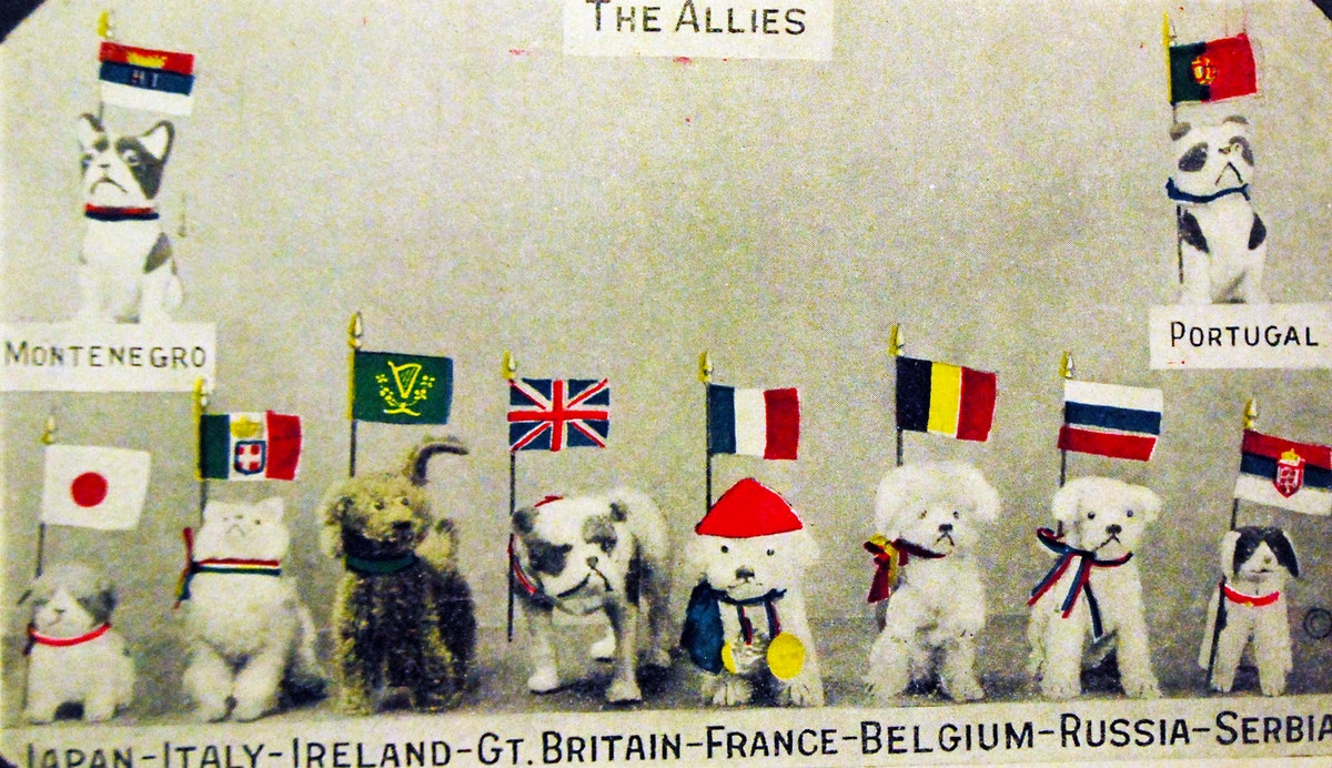 allies as puppies postcard