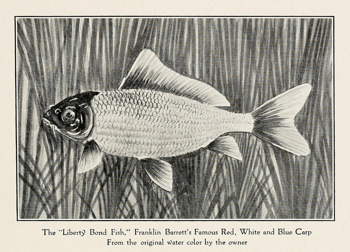 Franklin Barrett's red, white, and blue Liberty Bond Fish