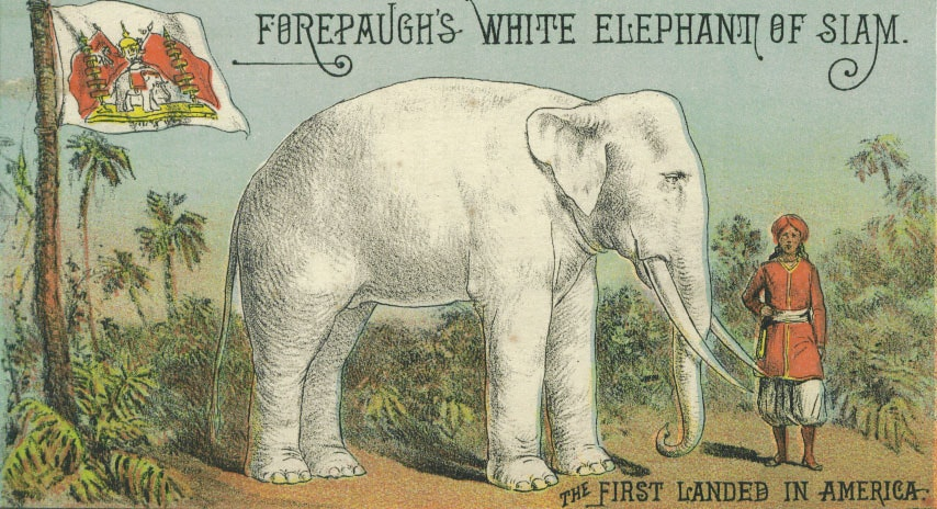 forepaugh white elephant