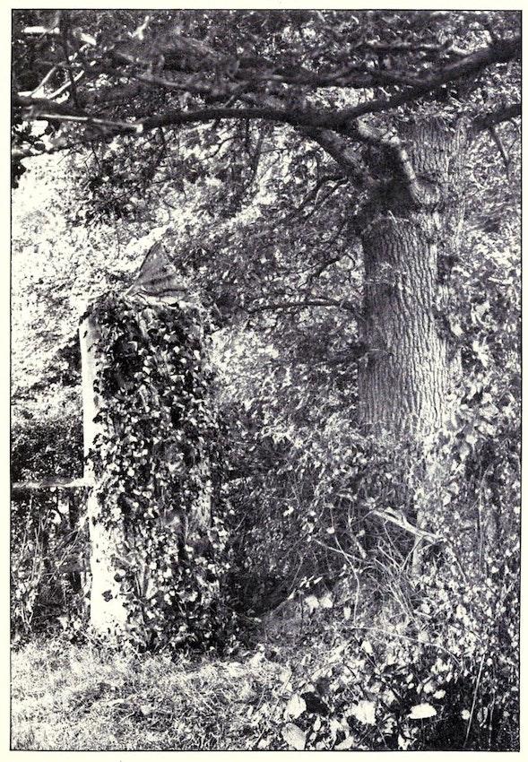 tree dummy 2