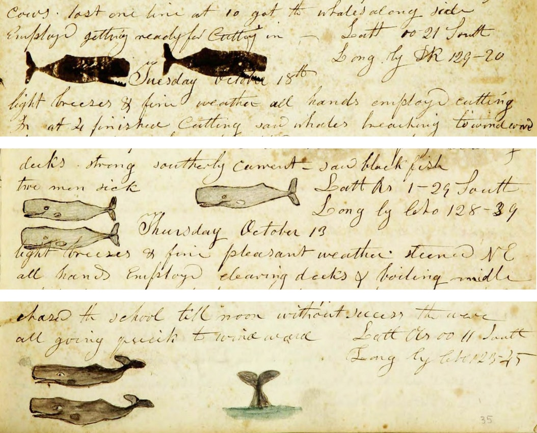 Whaling logbook illustration