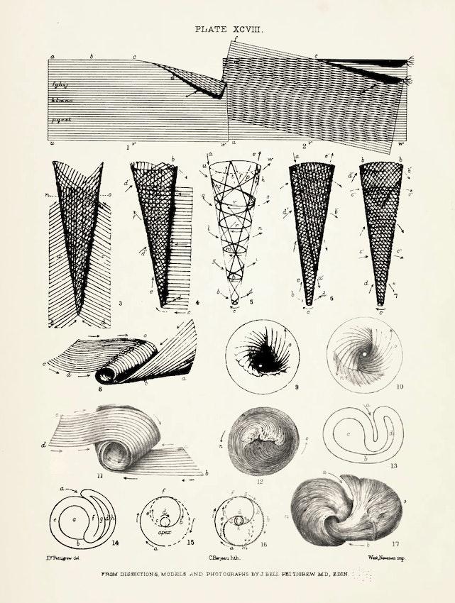 Illustration from James Pettigrew's Design in Nature