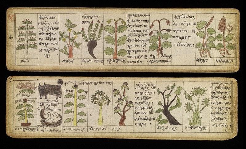 tibetan medical