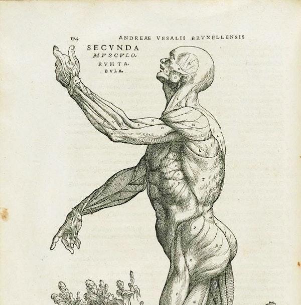 Vesalius and the Body Metaphor