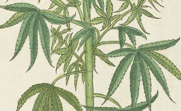 W. B. O'Shaughnessy and the Introduction of Cannabis to Modern Western Medicine