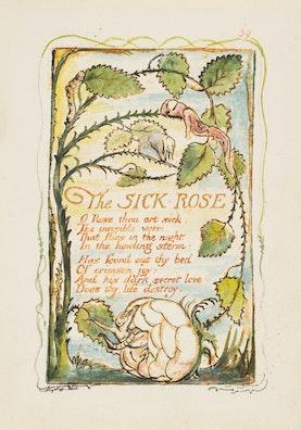 The Sick Rose