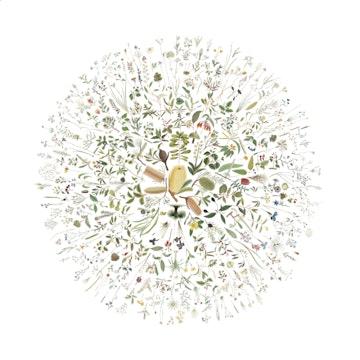 Visualisation of Australian Botanicals