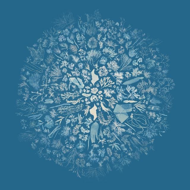 Visualisation of Anna Atkins' Cyanotypes