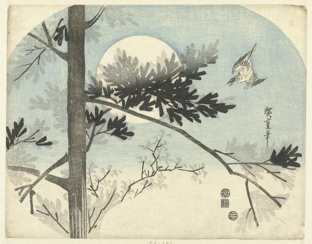Cuckoo and Pine