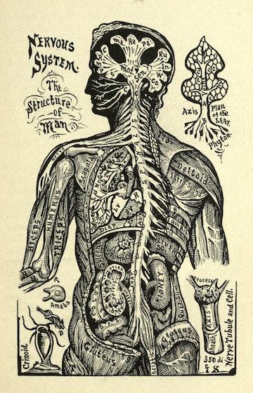 Nervous Structure