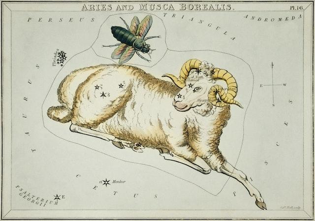 Aries and Musca Borealis