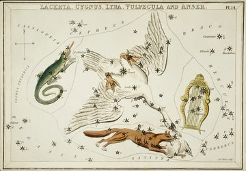 Lacerta, Cygnus, Lyra, Vulpecula and the Anser