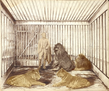 Portrait of a Man with Lions and Tigers