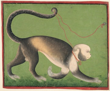 A Monumental Portrait of a Monkey