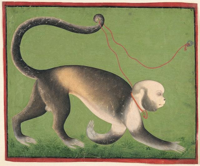 A Monumental Portrait of a Monkey