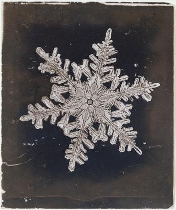 Snow Crystal I