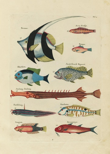 Louis Renard's Fish, Folio 3
