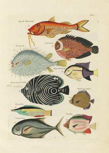 Louis Renard's Fish, Folio 5