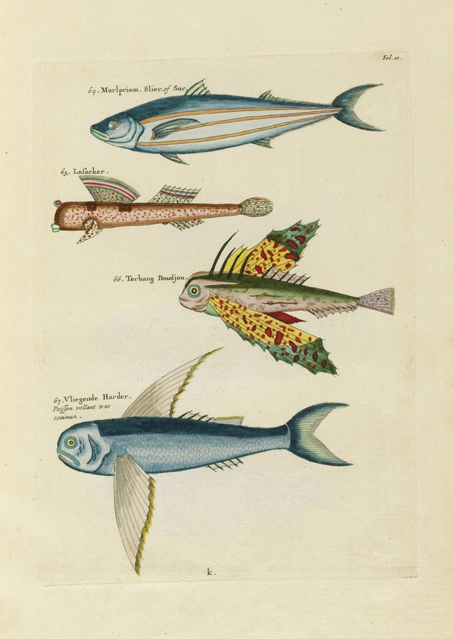 Louis Renard's Fish, Folio 10