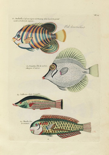Louis Renard's Fish, Folio 14