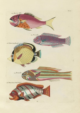 Louis Renard's Fish, Folio 21