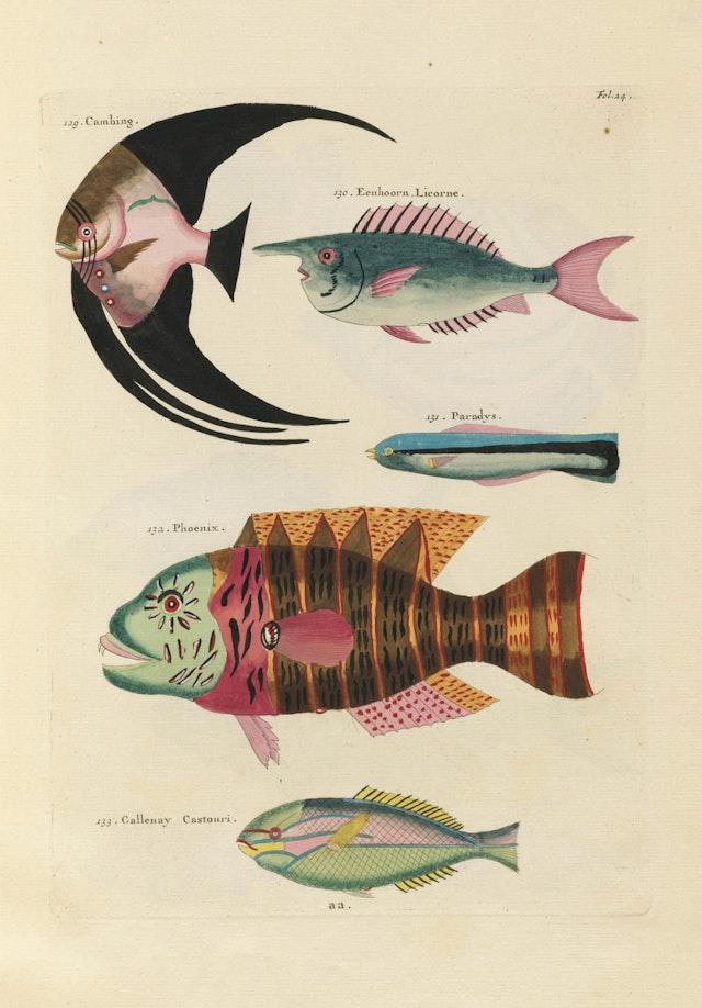 Louis Renard's Fish, Folio 24