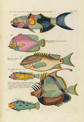 Louis Renard's Fish, Plate X
