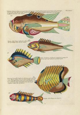 Louis Renard's Fish, Plate XX