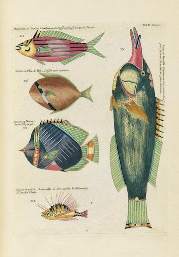 Louis Renard's Fish, Plate XXII