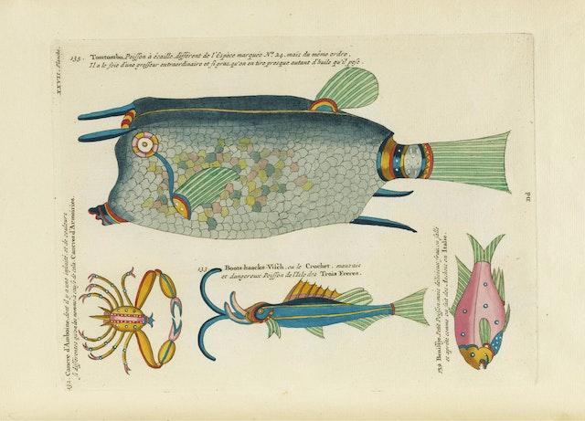 Louis Renard's Fish, Plate XXVII